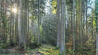 Trockenheit und Klimawandel machen dem Wald zu schaffen.