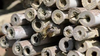 Im Pärkli gibts auch ein Wildbienenhotel.