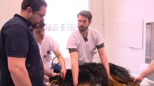 SOS Tierspital - Teil 1