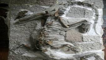 Dinosaurier «Fabian» war wohl rund 2,3 Meter lang und 40 Kilogramm schwer.
