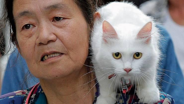 Auch Haustiere übertragen Krankheiten auf Menschen.