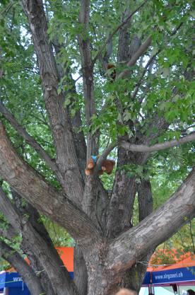 Das entführte Vereinsmaskottchen im Baum.