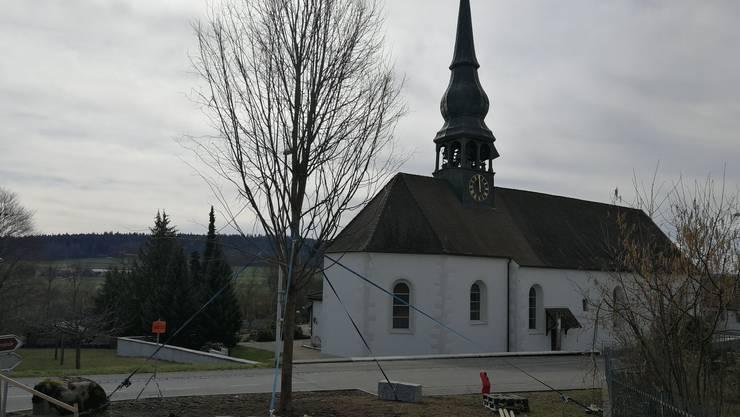 Die Junglinde in Wolfwil steht wieder