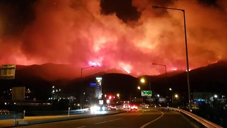 Ein riesiger Waldbrand wütet in Südkorea - die Regierung rief den Notstand aus, damit die betroffenen Gegenden besondere Unterstützung erhalten.