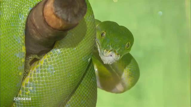 Mis Hobby: Der Schlangenzüchter