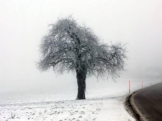 Hägglingen: Das Freiamt unter dem Nebel - viel schöner als auf den sonnigen, von Wintersportlern übervölkerten Höhen.