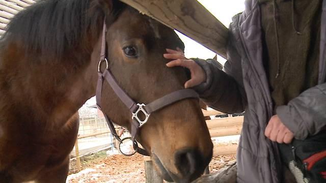 3 Murimoos-Pferden droht laut Flyer der Metzger
