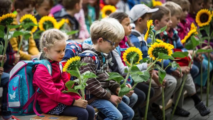 In Birmensdorf gibts Sonnenblumen für die Erstklässler.