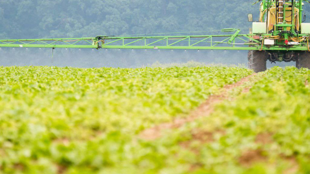 Ein Bauer sprüht Herbizide zur Vernichtung von Unkraut auf ein Feld mit Zuckerrüben. Über mögliche Risiken durch den Unkrautvernichter Glyphosat wird seit Jahren gestritten. (Archiv)