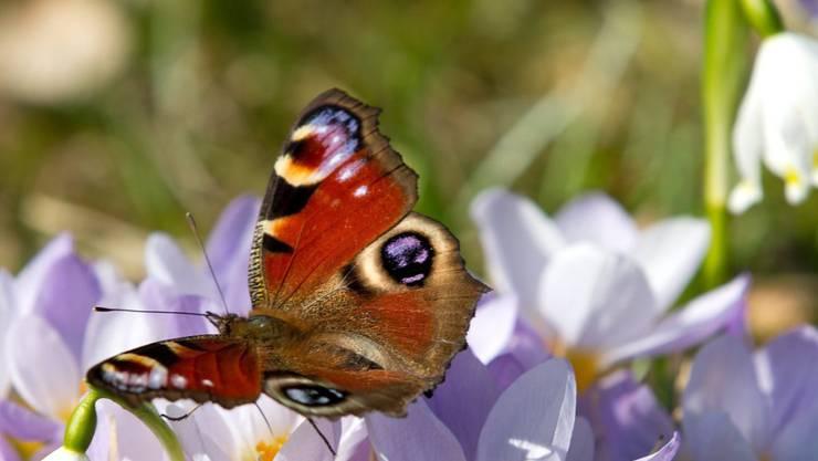 Der WWF Schweiz darf bei der Überprüfung von Pflanzenschutzmitteln mitreden, weil deren Einsatz Auswirkungen auf Pflanzen und Tiere hat. (Archiv)