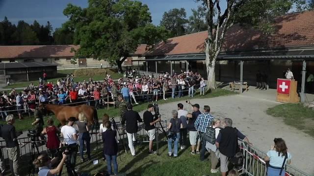 Versteigerung der Pferde aus Hefenhofen hat begonnen