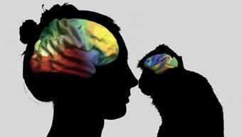 Die Orgnaisation des Gehirns verläuft schon bei Makaken über zwei Achsen - wie beim Menschen.
