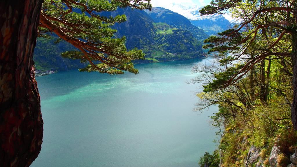 Luzern soll ein biodiverser Lebensraum sein