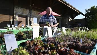 Staader Gemüsebauern: Verkauf wegen Corona  im Hofladen statt am Ostermarkt