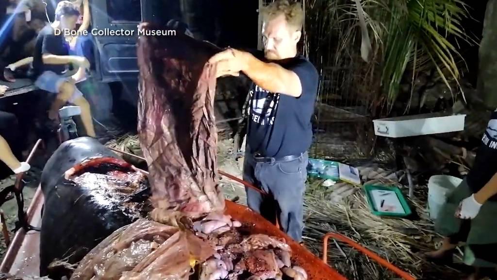 Toter Wal hatte 40 Kilogramm Plastik im Bauch