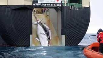 Walfang mit dem japanischen Schiff Yuschin Maru 2 (Archiv)