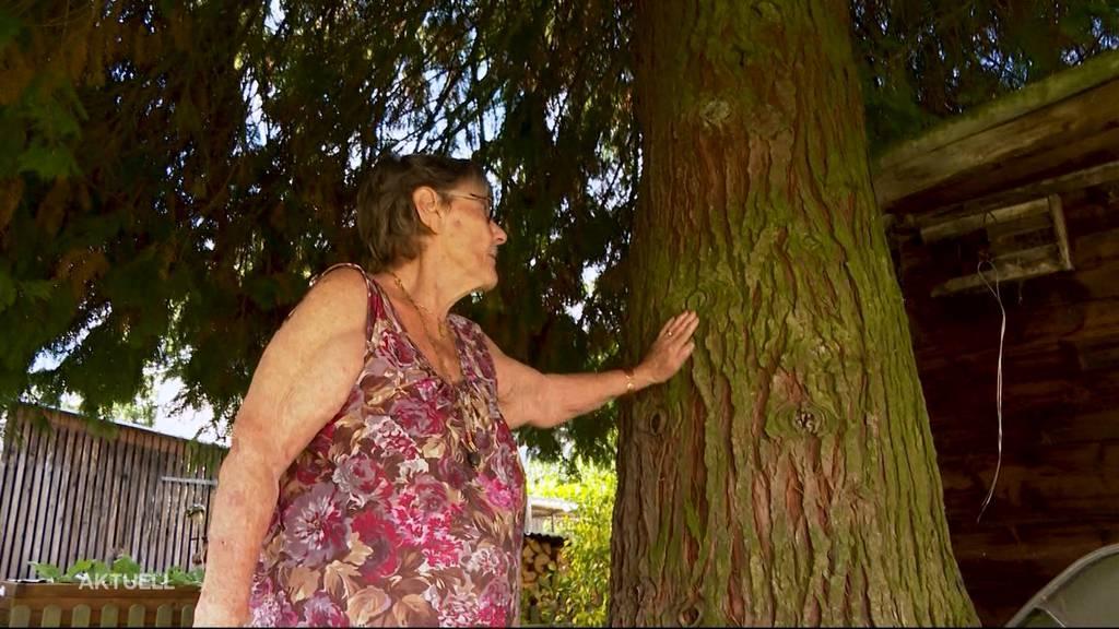 Thuja-Prozess in Seon: Der Lebensbaum muss sterben