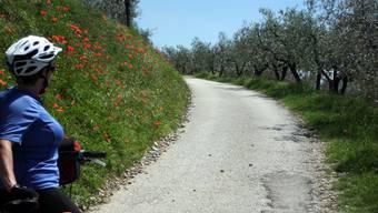 Die Via dei Olivi, eine traumhafe Velostrecke.