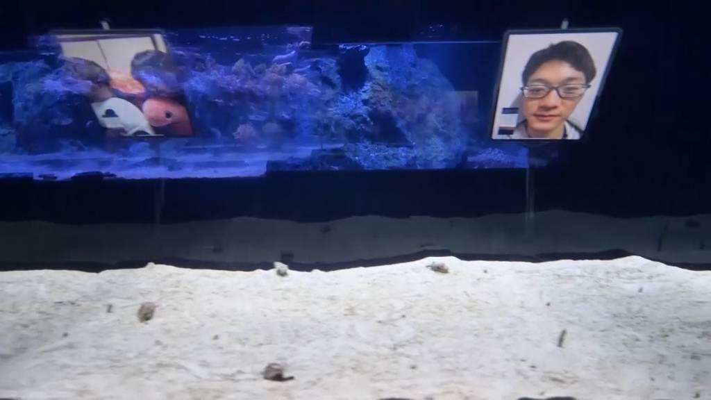 Facetime mit Aalen - Aquarium in Japan ermöglicht es