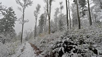Schnee auf dem Passwang
