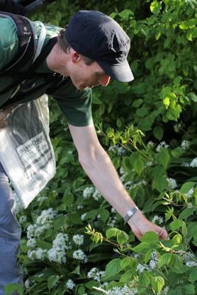Martin Keiser lenkte die Aufmerksamkeit der Teilnehmer immer wieder auch auf die einheimische Flora