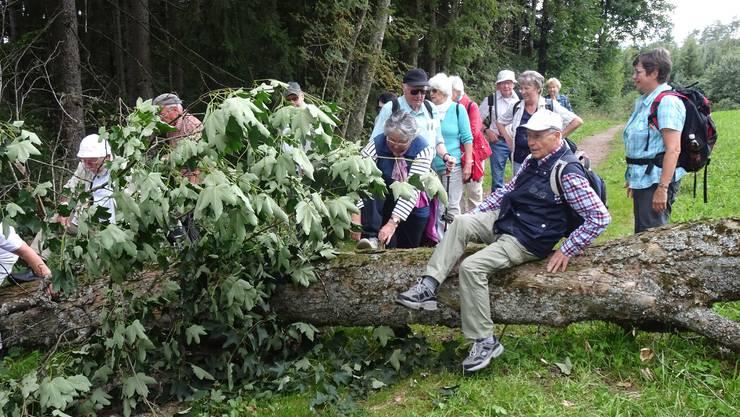 """Auch im Schwarzwald hatte es gestürmt: Hindernislauf auf dem """"Schinkenweg"""""""