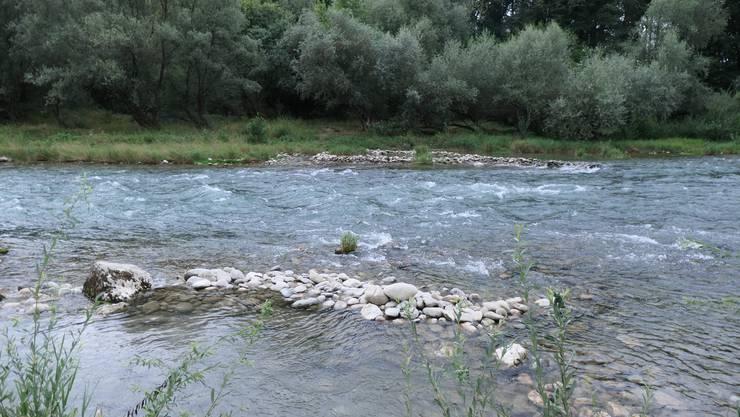 Aare bei Gösgen mit Weiden (Salix) um Uferrand.
