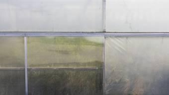 Gewächshäuser im Kanton Zürich sollen klimaneutral geheizt werden, findet eine Mehrheit des Kantonsrats. Bürgerliche, darunter auch Bio-Bauern, wollen jedoch keine kantonale Lösung. (Symbolbild)
