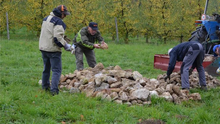 Ein klassischer Naturschutzeinsatz: BNV-Mitglieder legen in Zeglingen einen Steinhaufen als Unterschlupf für Wiesel an. Hier sähe der BNV künftig gerne auch Junge.