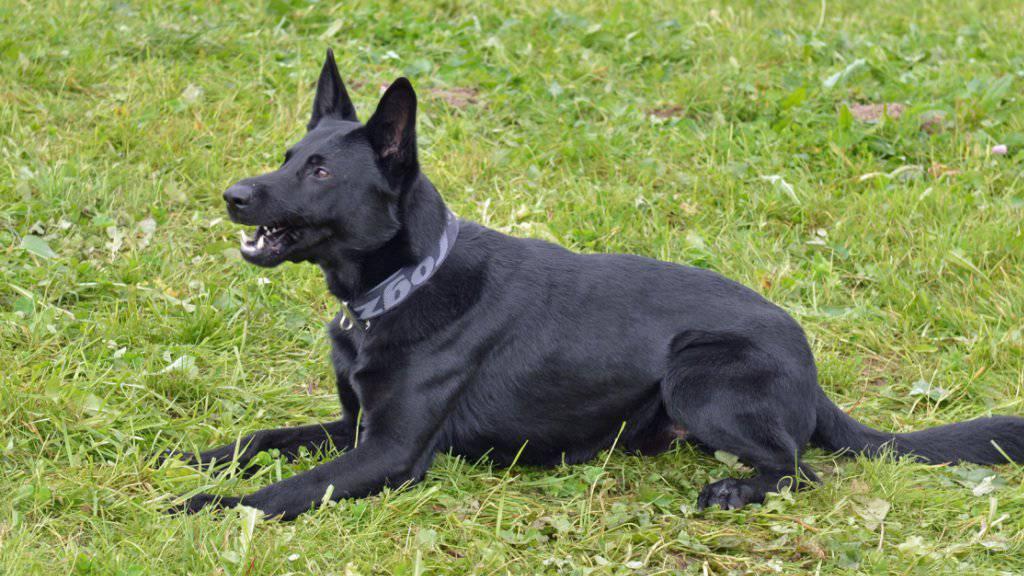 Polizeihund hilft bei Festnahme