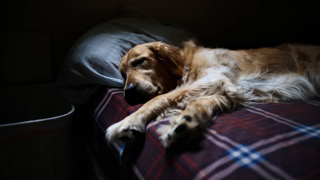 Hund im Bett – eine gute Idee?
