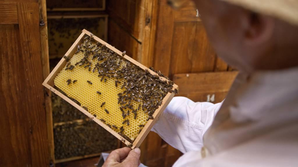 Was ist mit den Bienen im Vorarlberg passiert?