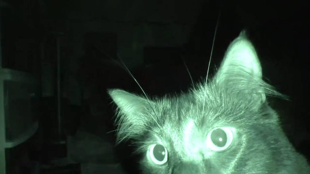 Der ganz normale Horror: Das macht Ihre Katze nachts