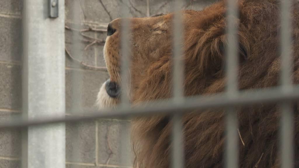 Trotz Einschränkungen: Grosse Vorfreude bei den Zoos