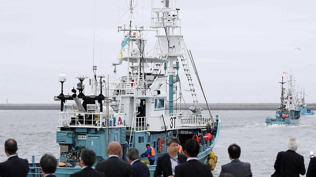 Japans Walfangflotte läuft nach drei Jahrzehnten erzwungener Pause erstmals wieder zur kommerziellen Jagd aus.