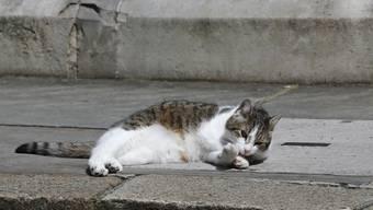 Die Katzen an der Downing Street 10