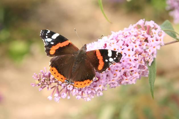 Für ihre Ernährung benötigen die meisten Insekten Nektar und Pollen, die sie in den Blüten von Pflanzen finden.