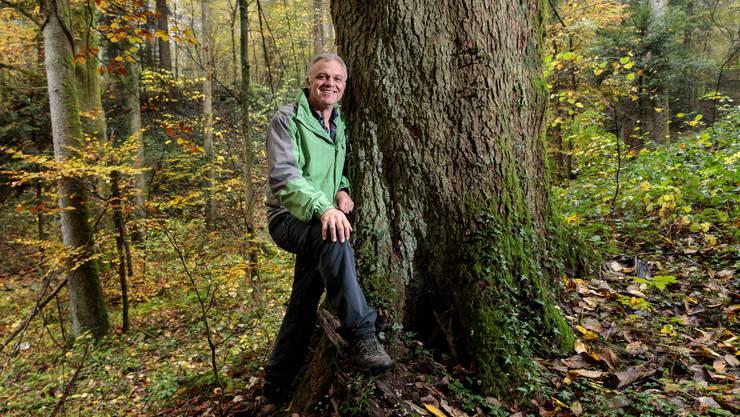 Trotzt dem Klimawandel: Die Weisstanne, Lieblingsbaum von Revierförster Studer.