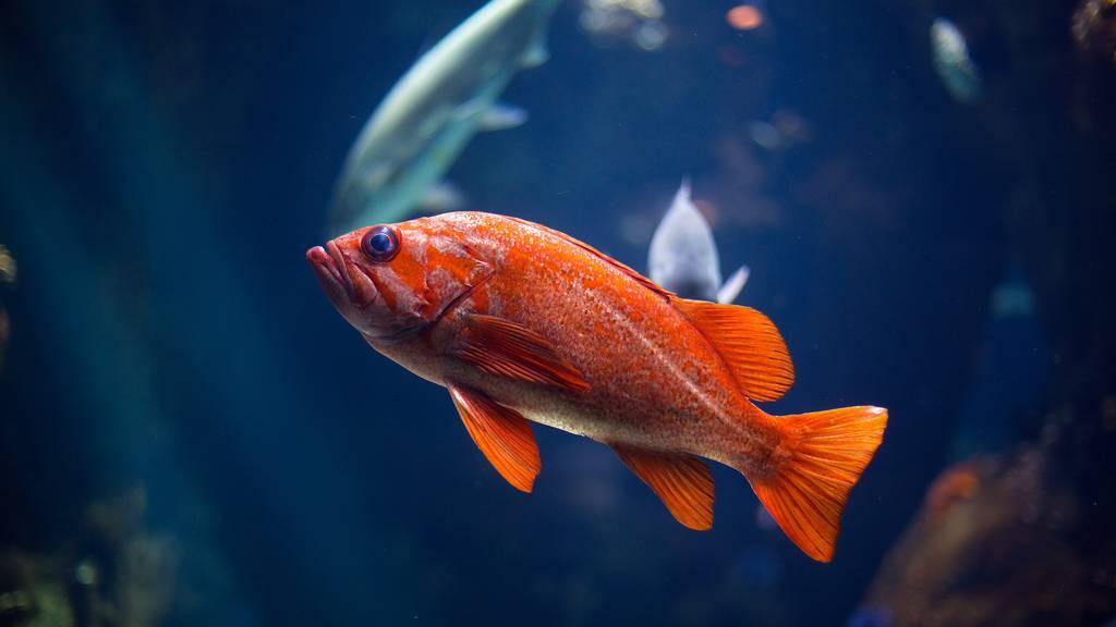 Spannende und lustige Fakten über Fische