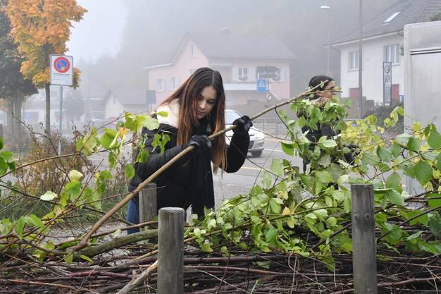 Die Schüler und Schülerinnen kümmern sich um das Zelgli-Areal