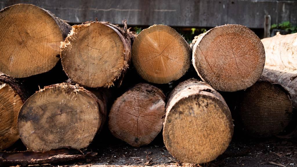 Schweizer Holz: Wir haben ein Luxusproblem
