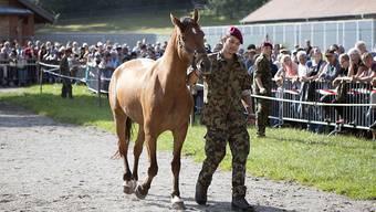 Bereits Mitte August wurden 80 Pferde des mutmasslichen Tierquälers aus Hefenhofen TG durch die Armee in Schönbühl BE versteigert. (Archivbild)
