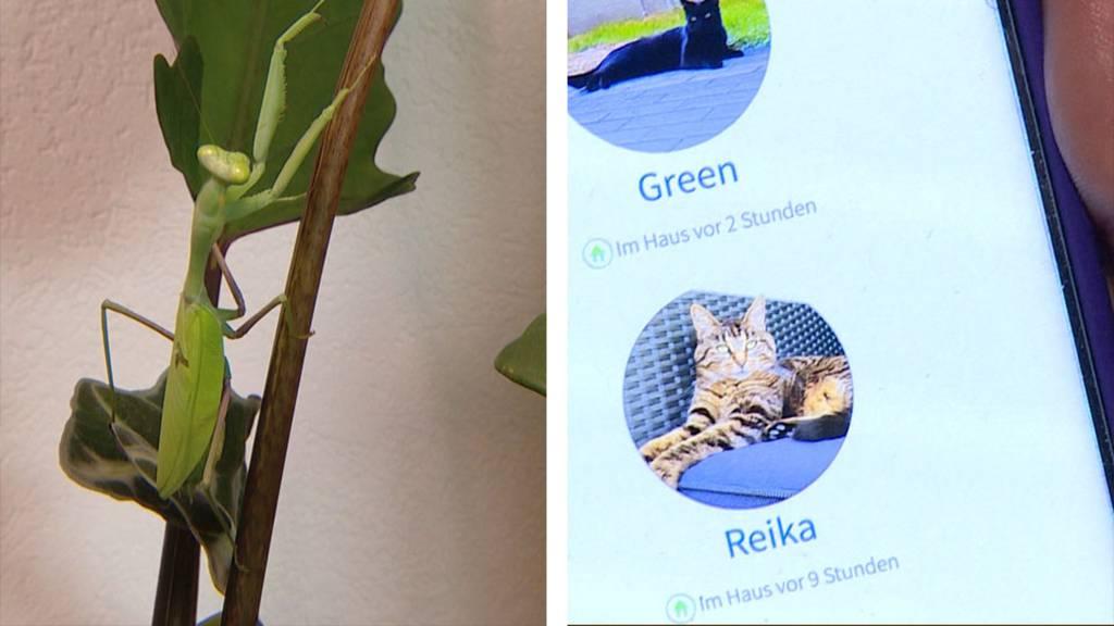 Exotische Haustiere /  Mikrochipgesteuerte Katzenklappe