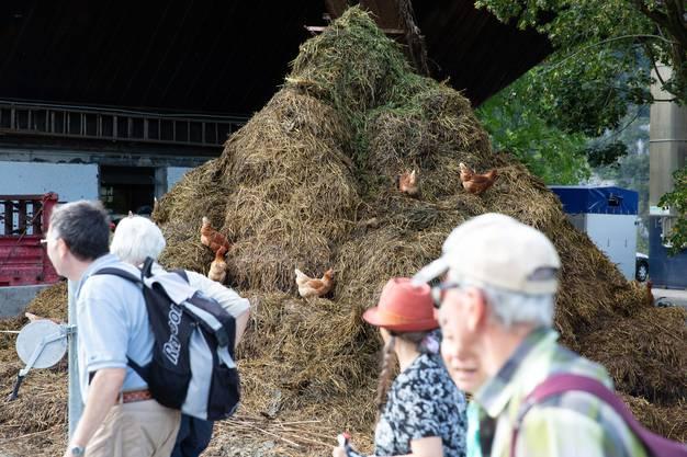 Auf dem Hof von Familie Gafner ob Moutier waren alle ganz fasziniert von diesen glücklichen Hühnern.