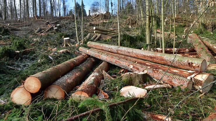 Die Aufräumarbeiten in den Niederämter Wäldern dauern noch an, so auch hier im Waldstück am Buerweg in der Nachbargemeinde Obergösgen.
