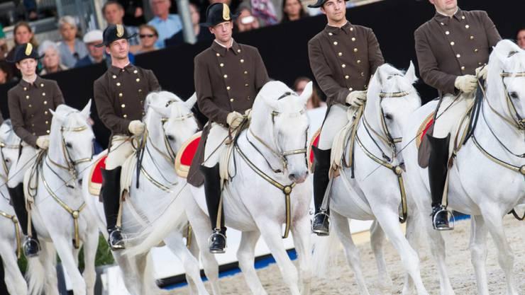 Lipizzaner mit Reiter an der Vorpremiere zur Jubiläumsvorstellung 450 Jahre Spanische Hofreitschule am Donnerstag in Wien.