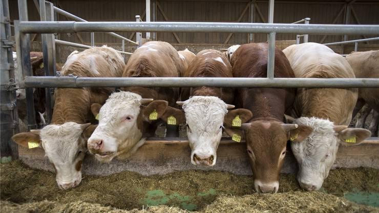 Ob aus der Schweiz, Eritrea oder Peru: Den hiesigen Kühen dürfte egal sein, woher ihr Heu kommt.Gaetan Bally/KEystone