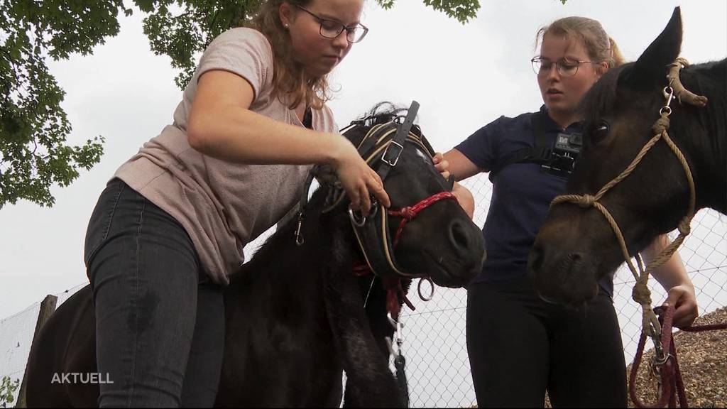 Freiämter Zwillinge reisen per Pony-Kutsche an den Genfersee