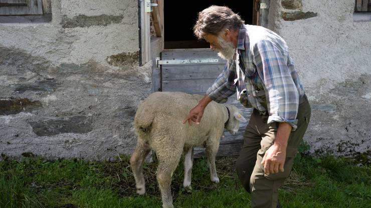 Willi Illien fühlt sich für seine Tiere verantwortlich.