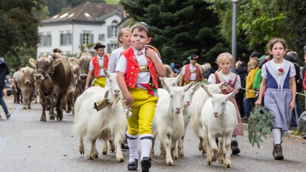 100. Viehschau: Tradition hoch über dem Bodensee